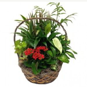 Morristown Florist | Indoor Garden