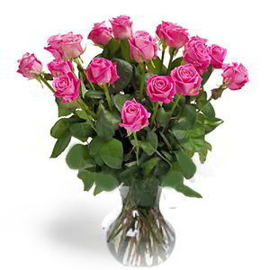Morristown Florist | 18 Pink Roses